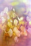 Bella pianta asciutta in autunno Fotografia Stock Libera da Diritti