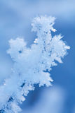 Bella pianta congelata di inverno fotografie stock