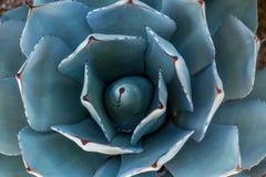 Bella pianta del cactus immagine stock libera da diritti