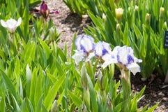 Bella pianta del fiore di estate Immagine Stock