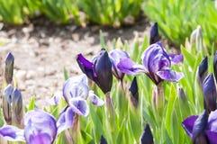 Bella pianta del fiore di estate Fotografia Stock Libera da Diritti