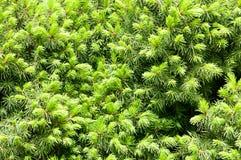 Bella pianta del fiore di estate Fotografie Stock