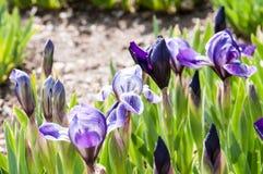 Bella pianta del fiore di estate Immagine Stock Libera da Diritti