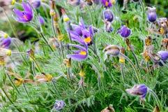 Bella pianta del fiore di estate Fotografie Stock Libere da Diritti