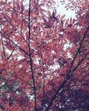 Bella pianta di autunno fotografia stock