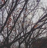 Bella pianta di autunno fotografie stock