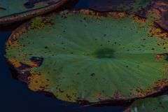 Bella pianta di piccolo colpo della palude da vicino fotografia stock