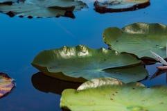 Bella pianta di piccolo colpo della palude da vicino immagini stock