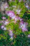 Bella pianta porpora selvatica dei fiori fotografie stock