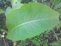 Bella pianta verde Immagine Stock
