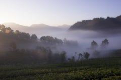 Bella piantagione della fragola in valle Fotografie Stock