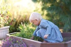 Bella piccola ragazza del bambino che raccoglie le verdure dal giardino fotografia stock