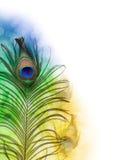 Bella piuma esotica del pavone Fotografie Stock