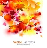 Bella priorità bassa con i fogli d'autunno illustrazione vettoriale