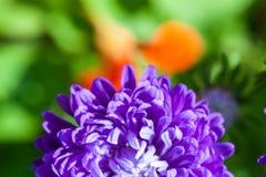 Bella priorità bassa floreale astratta con i germogli di fiore dentellare e gli indicatori luminosi defocused Progettazione del c Immagine Stock Libera da Diritti