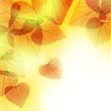 Bella priorità bassa floreale dei fogli di autunno Fotografia Stock
