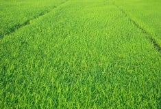 Bella priorità bassa verde Immagini Stock