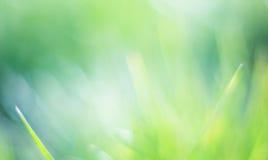 Bella priorità bassa verde del bokeh fotografia stock libera da diritti