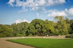 Bella progettazione del giardino della molla, con gli alberi della conifera, l'erba verde ed il sole eneving Progettazione di lus Fotografia Stock Libera da Diritti