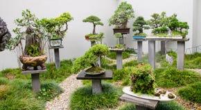Bella raccolta degli alberi dei bonsai con i vasi in un giardino immagini stock libere da diritti