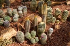 Bella raccolta del cactus in giardino botanico fotografia stock