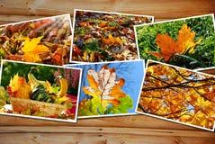 Bella raccolta di immagini di autunno Immagini Stock Libere da Diritti