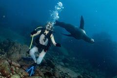 Bella ragazza bionda che gioca con il underwater del leone marino immagini stock libere da diritti