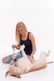 Bella ragazza bionda con labrador retriever immagini stock libere da diritti