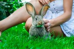 Bella ragazza con capelli rossi sulla natura con un coniglio in sue mani Immagini Stock Libere da Diritti
