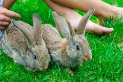 Bella ragazza con capelli rossi sulla natura con un coniglio in sue mani Fotografia Stock Libera da Diritti