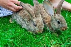 Bella ragazza con capelli rossi sulla natura con un coniglio in sue mani Fotografia Stock