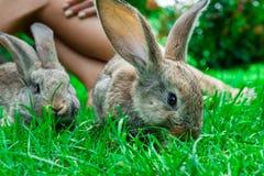 Bella ragazza con capelli rossi sulla natura con un coniglio in sue mani Fotografie Stock