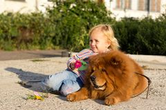 Bella ragazza con il cane Fotografia Stock