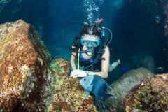 Bella ragazza dell'operatore subacqueo di Latina mentre toccando un pesce fotografie stock