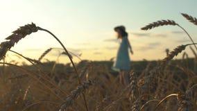 Bella ragazza felice in un cappello di paglia ed in un dancing del vestito in un giacimento di grano nel tramonto stock footage