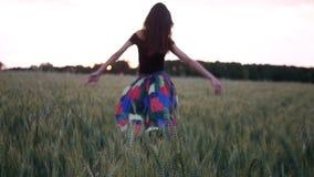 Bella ragazza in vestito che cammina nel campo diretto che tocca le orecchie del grano al tramonto video d archivio