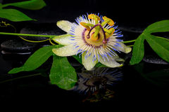 Bella regolazione della stazione termale del fiore della passiflora e del ramo verde Immagine Stock