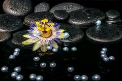 Bella regolazione della stazione termale del fiore della passiflora sulle pietre del basalto di zen Immagini Stock