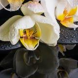 Bella regolazione della stazione termale dell'orchidea bianca (phalaenopsis), pietre di zen Fotografie Stock Libere da Diritti
