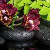 Bella regolazione della stazione termale dell'orchidea profonda della ciliegia (phalaenopsis), Fotografie Stock Libere da Diritti