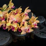 Bella regolazione della stazione termale delle pietre di zen con le gocce ed il ramoscello di fioritura Fotografia Stock Libera da Diritti
