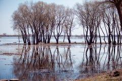 Bella riflessione degli alberi nel lago, bellezza Immagine Stock Libera da Diritti