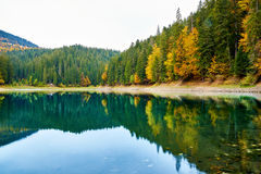 Bella riflessione degli alberi nel lago della foresta della montagna Immagini Stock Libere da Diritti