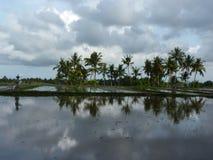 Bella riflessione delle palme e di un agricoltore nell'acqua sulle belle risaie bali l'indonesia Fotografia Stock