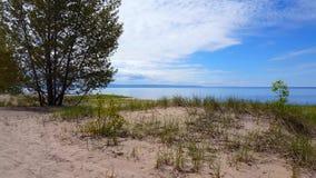 Bella riva della spiaggia con gli alberi verdi fertili durante il day? di estate Litorale della sabbia con la natura verde scenic video d archivio