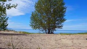 Bella riva della spiaggia con gli alberi verdi fertili durante il giorno di estate Litorale della sabbia con la natura verde scen stock footage