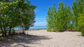Bella riva della spiaggia con gli alberi verdi fertili durante il giorno di estate Litorale della sabbia con la natura verde scen video d archivio