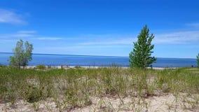Bella riva della spiaggia con gli alberi verdi fertili durante il giorno di estate Sabbia Shoreline con la natura verde scenica archivi video