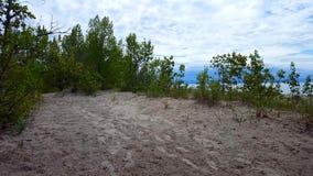 Bella riva della spiaggia con gli alberi verdi fertili durante il giorno di estate Sabbia Shoreline con la natura verde scenica video d archivio