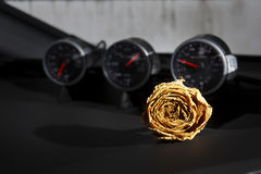 bella rosa asciutta di bianco sulla console dell'automobile sportiva Immagini Stock